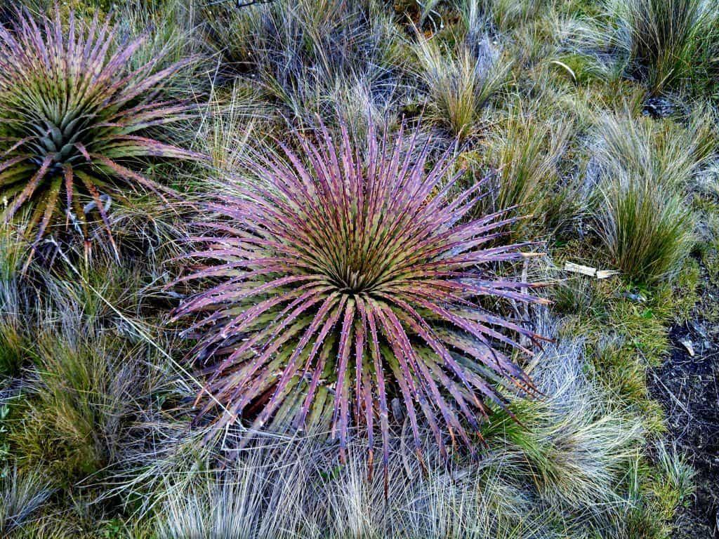El Cajas National Park Ecuador