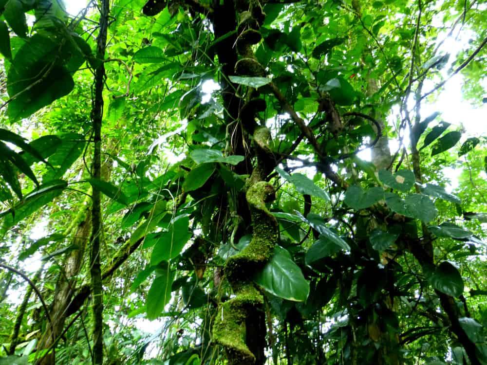 Rainforest Tour Costa Rica