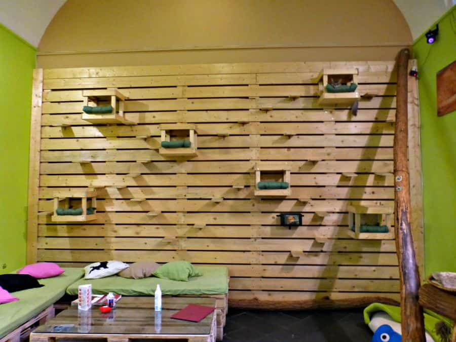Wall of cat lounges