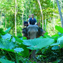 Should You Ride Elephants in Thailand? It's Complicated