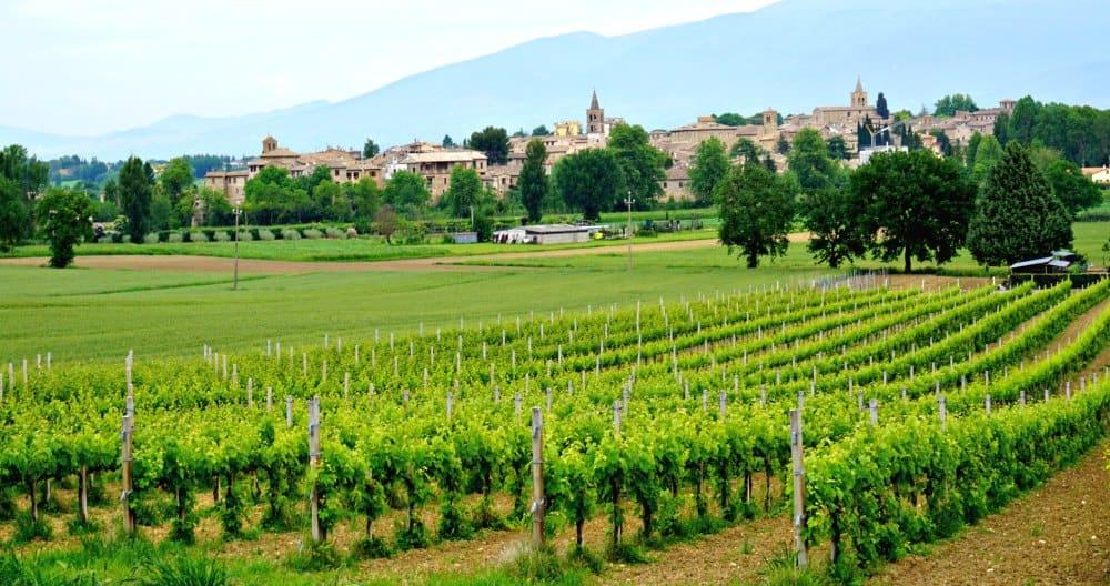 Wine Tasting in Umbria, Italy