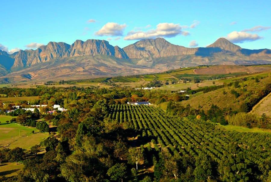 Stellenbosch Wine Farm