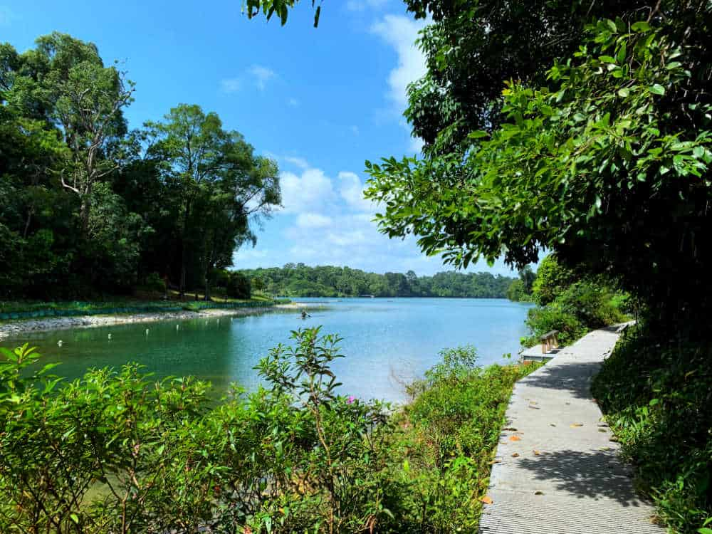 Hiking in Singapore: MacRitchie Park