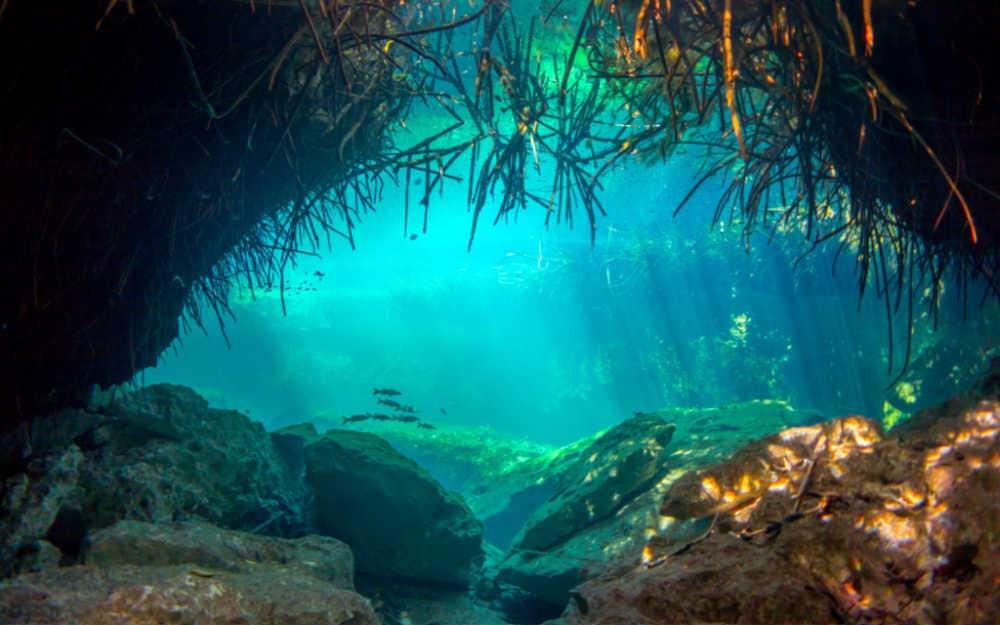 Cenote Casa Underwater